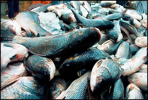 senoko-fishery-port